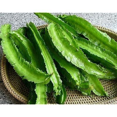 Winged Beans -Dau Rong;Tour-Poo (Psophocarpus Tetragonolobus) 50 seeds : Garden & Outdoor
