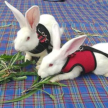 Cutogain animal domestique en maille souple Harnais avec laisse pour petits animaux Gilet Laisse pour hamster Lapin