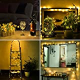LED Fairy String Lights,ANJAYLIA 10Ft/3M 30leds