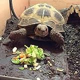Fennstones large real natural slate stone rock for vivarium tortoise beak and snake basking lizard claw trim compatible with heat mat