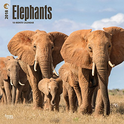 Elephants 2018 Monthly Square Wall Calendar