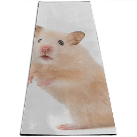 Amazon.com: GGKDL Frelonic Exercise Mat Hamster On White ...