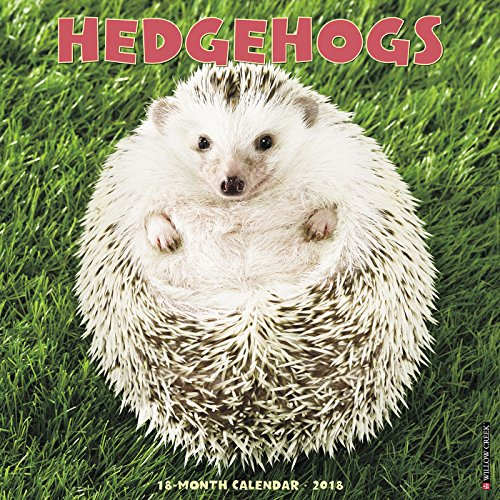 Hedgehogs 2018 Calendar
