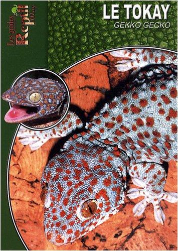(Le tokay : Gekko gecko)