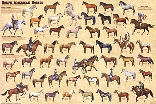 Laminated North American Horses Educational Chart Poster 36