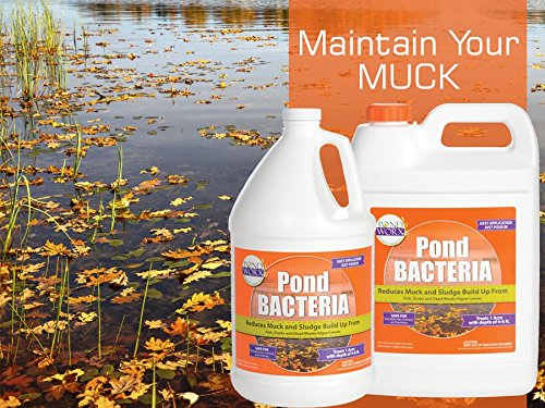 PondWorx Pond Bacteria - Formulated for Large Ponds, Water Features and Safe for Koi - 1 Gallon by PondWorx (Image #2)