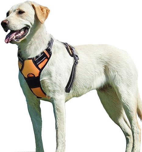 Homein® - Eagloo - Arnés para perro antitirones / antiasfixia ...