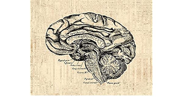 Amazon old fashioned brain diagram print for medical anatomy amazon old fashioned brain diagram print for medical anatomy wall art home decoration brain illustration print in a vintage script paper style ccuart Image collections