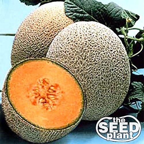 Hale's Best Jumbo Cantaloupe Seeds - 50 Seeds Non-GMO