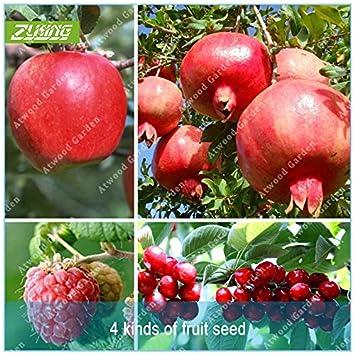ZLKING 4 Tipo de fruta fruta de árbol Bonsai Semillas Semillas de vegetales y frutas deliciosa cereza granada frambuesa totales 100 + PC: Amazon.es: Jardín