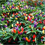 80 pcs Ornamental Hot Pepper Seeds Prairie Fire Edible Grow Inside or Out Home