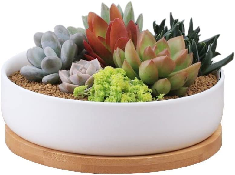 STAR-TOP Succulent Planter Pot,Small Modern Decorative Ceramic Cement Flower Plant Pot with Drainage – Home Office Desk Garden Mini Cactus Pot Indoor Decoration Shallow Flowerpot