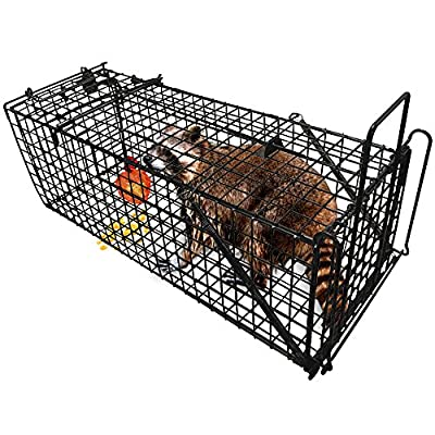 """Humane Live Animal Trap 31""""X10.5""""X11.5"""" Catch Release Cage for Large Nuisance Rodents Control Raccoon Mole Gopher Opossum Skunk Groundhog Squirrel Spay Feral Stray Cats Rescue Wild Rabbits"""