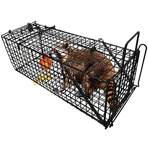"Humane Live Animal Trap 31""X10.5""X11.5"" Catch Release Cage for Large Nuisance Rodents Control Raccoon Mole Gopher Opossum Skunk Groundhog Squirrel Spay Feral Stray Cats Rescue Wild Rabbits"