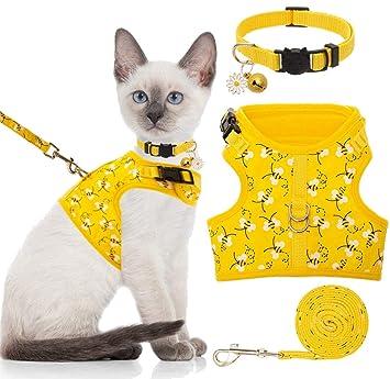 Amazon.com: Arnés para gato Bingpet con correa y collar para ...