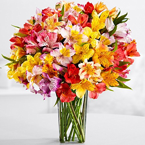 ProFlowers - 25 Count Multi-Colored 100 Blooms of Peruvian Lilies