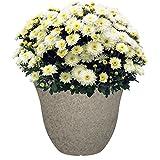 "Honeysuckle Planter, Patio Pot, 13"" Stone"