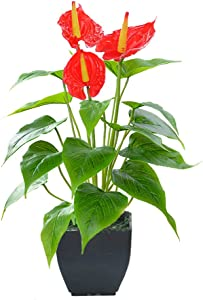 Artificial Flower Calla Lily Faux Small Potted Plant with Black Pot Fake Bonsai Flower for Home, Office, Indoor and Outdoor Occasions Decor (Red Fake Flower)