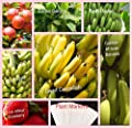 Banana New Fruit Combo Pack Banana Tree, Strawberry, Apple Tree (Organic) 210+ Seeds 650327337749 Self Fertile + 7 Free Plant Marker Grand Naine Cavendish Lady Finger
