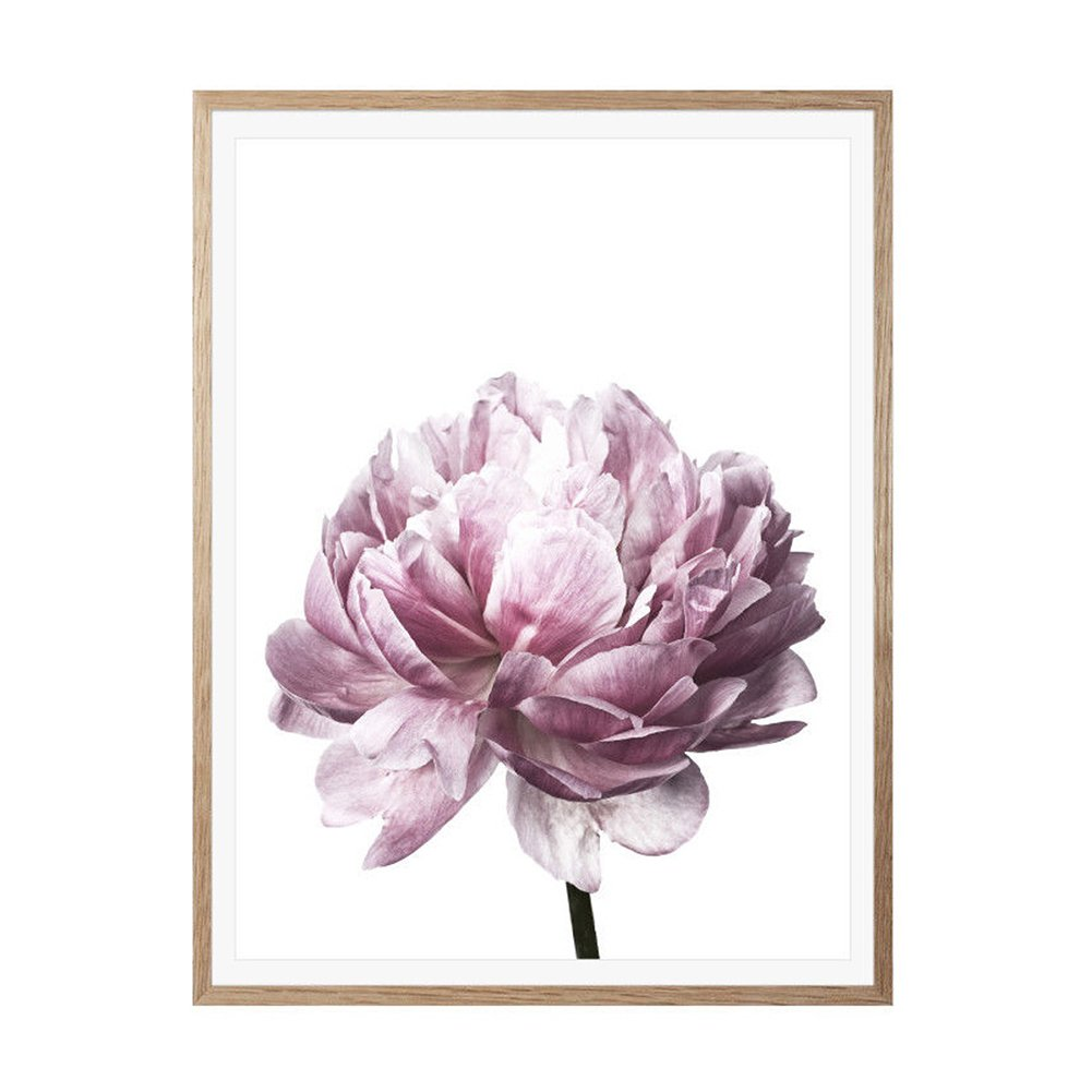 Afco Nordic Minimalist Peony Painting Floral Flower Picture Wall Art Home Decor Gift Living Room Bedroom 13336081 1# 30cm x 40cm