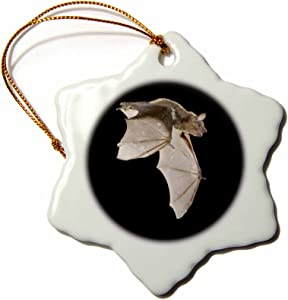 3dRose orn_84259_1 Evening Bat Leaving Day Roost in Tree Hole, Texas NA02 RNU0128 Rolf Nussbaumer Snowflake Porcelain Ornament, 3-Inch
