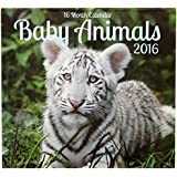2016 Baby Animals 16 Month Wall Calendar
