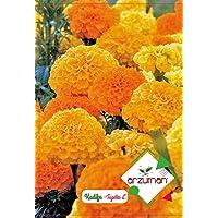 Kadife Çiçeği Tohumu 50 Adet