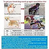 HiHydro Dog Wheelchair Lightweight Adjustable Pet