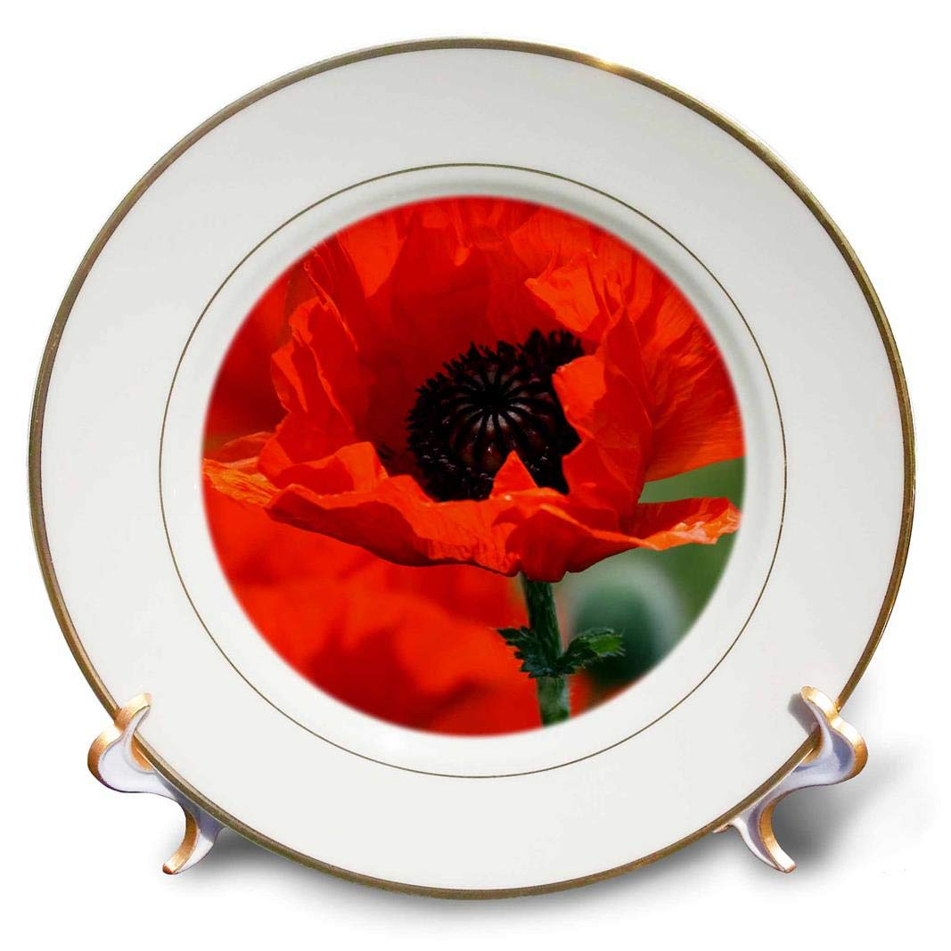 3dRose cp/_29205/_1 Beautiful Red Poppy-Porcelain Plate 8-Inch