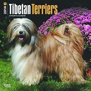 Tibetan Terriers 2014 Wall Calendar
