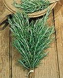 Rosemary Seeds - Rosmarinus Officinalis - .2 Grams - Approx 140 Gardening Seeds - Herb Garden Seed