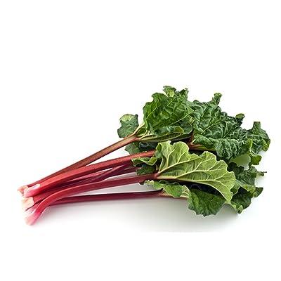 Rhubarb Leader - 50 Seeds - Organically Grown - NON-GMO : Garden & Outdoor