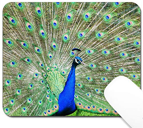 - MSD Mouse Pad with Design - Non-Slip Gaming Mouse Pad - Image ID 20005901 Peacock Showing Off Colorful Feathers