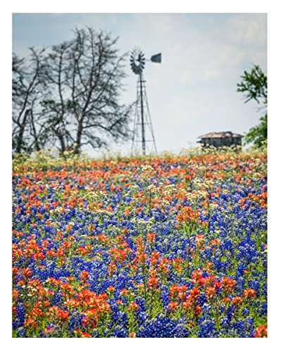 Texas Bluebonnets and Indian Paintbrush Wildflowers - 11x14 Unframed Photo Art Print - A Great Gift for Texans or Anyone Who Loves Flowers - Living Room Dorm Game Bedroom by Dogstar Pics