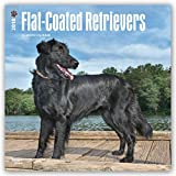 Flat Coated Retrievers 2018 12 x 12 Inch Monthly Square Wall Calendar, Animals Dog Breeds Retrievers (Multilingual Edition)