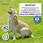 Arava Flea & Tick Prevention Collar - for Dogs & Puppies - Length-25'' - 11 Natural Active Ingredients - Safe for Babies & Pets - Safely Repels Pests - Enhanced Control & Defense - 6 Months Protection 14
