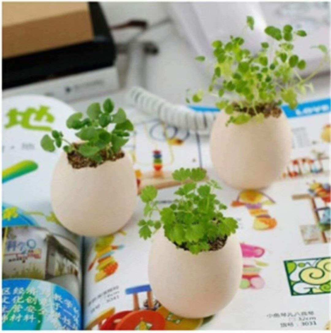 CARDEON Cute Lucky Egg Shaped Potted Plants Home Garden Plant Desktop Bonsai Decor
