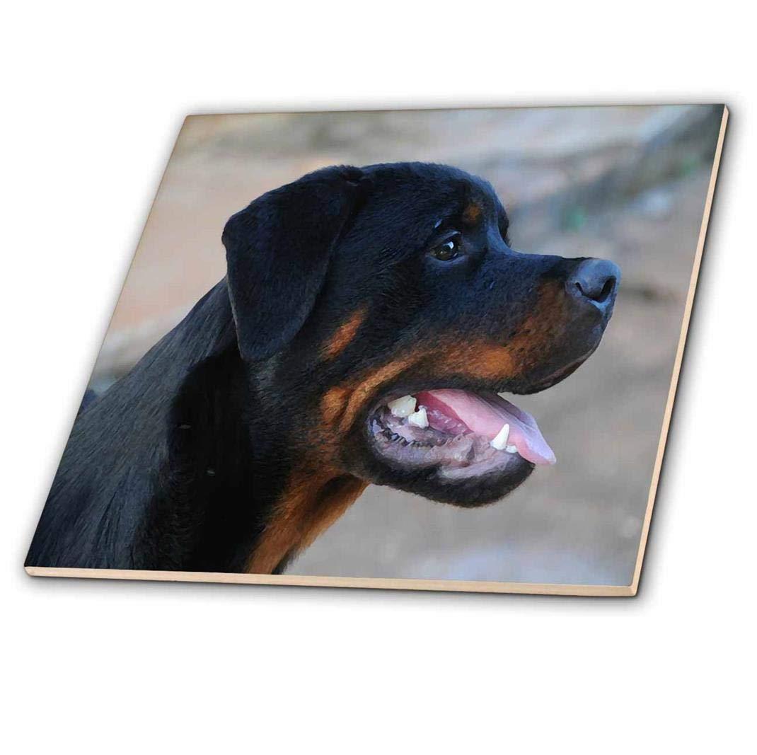 ct/_203747/_1 3dRose Print of Rottweiler Portrait Painting Ceramic Tile 4-Inch