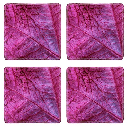 Annual Coleus (MSD Square Coasters Non-Slip Natural Rubber Desk Coasters design 30199049 Coleus Leaf Coleus is an annual colorful foliage that adds vivid colors to the garden)
