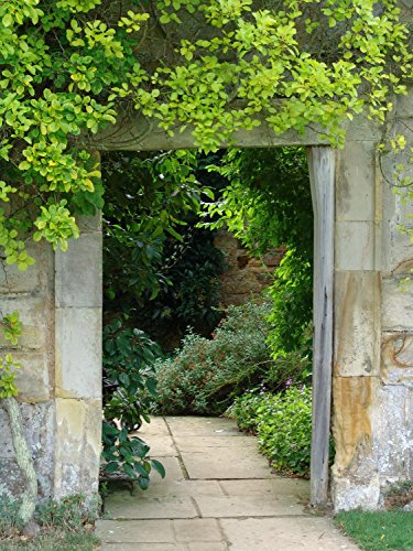 Wallmonkeys WM100570 Framed Doorway in Garden Peel and Stick Wall Decals (30 in H x 23 in W), Medium-Large ()