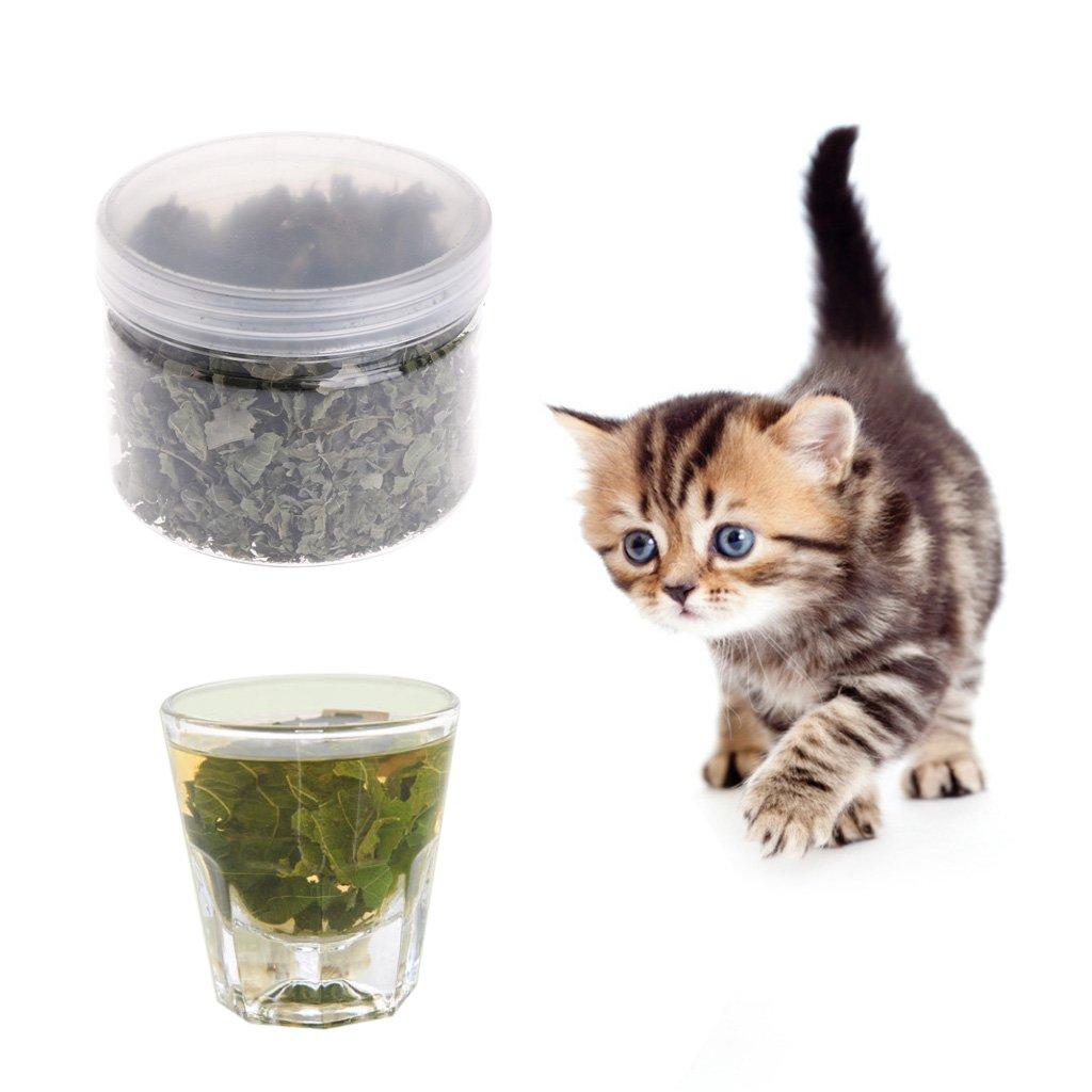 Hojas naturales de Silvervine, gato, hierba gatera, polígono, matatabi, juguetes, aperitivos con sabor: Amazon.es: Hogar