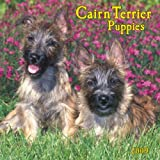Cairn Terrier Puppies 2009 7X7 Mini Wall Calendar