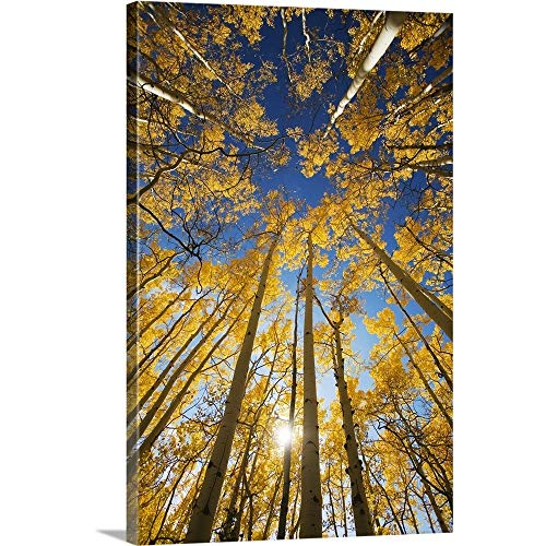 Colorado, Near Steamboat Springs, Buffalo Pass, Yellow Aspen Tree Canopy Canvas Wall Art - Furniture Colorado Bedroom
