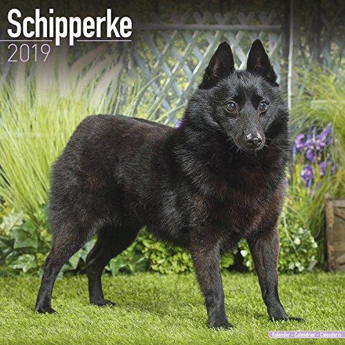Schipperke Calendar 2019 - Dog Breed Calendar - Wall Calendar 2018-2019