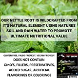 Stinging Nettle Root Extract (75g) - 10:1