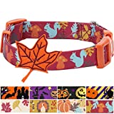 "Blueberry Pet 8 Patterns Thanksgiving Fall Fun Enchanting Squirrel Designer Dog Collar with Maple, Small, Neck 12""-16"", Adjustable Collars for Dogs"