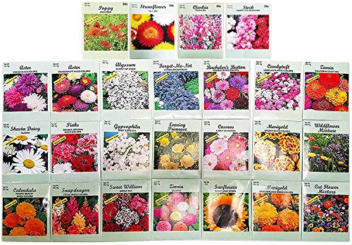 Set of 25 Flower Seed Packets Including 10 Or More Varieties Forget Me Nots, Pinks, Marigolds, Zinnia, Wildflower, Poppy, Snapdragon and More (Sweet Alyssum Seeds)
