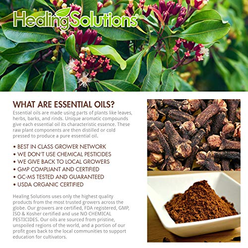 Clove Essential Oil - 100% Pure Therapeutic Grade Clove Oil - 10ml