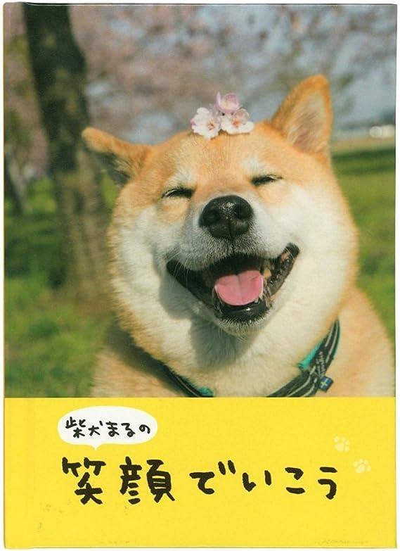 まる 柴犬