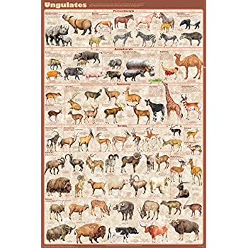 Animal Kingdom II Laminated Educational Science Teacher Class Chart Poster 24x36